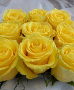 Yellow_1